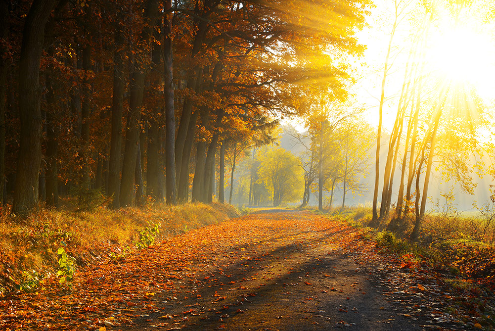Sunlight bathing a forest of trees in golden light