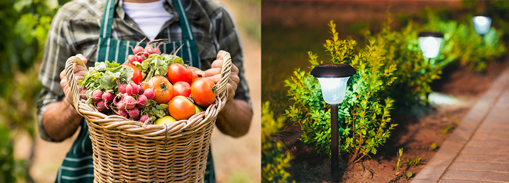 Hand-picked fruit and veg and solar lights in the garden